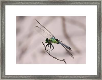Dragon Fly Framed Print by Jeanne Andrews