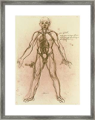 Drawing Of Human Venous System (leonardo Da Vinci) Framed Print by Mehau Kulyk