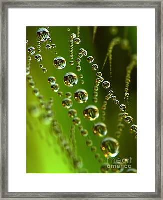Drops In Spiderweb Framed Print by Odon Czintos