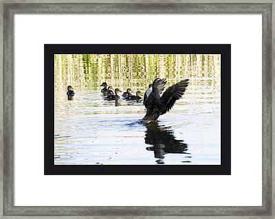 Duck Family Framed Print by Odon Czintos
