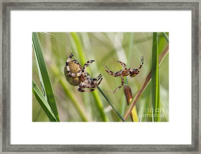 Duel Framed Print by Michal Boubin