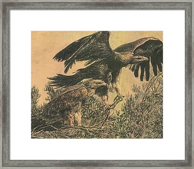 Eagle's Roost Framed Print