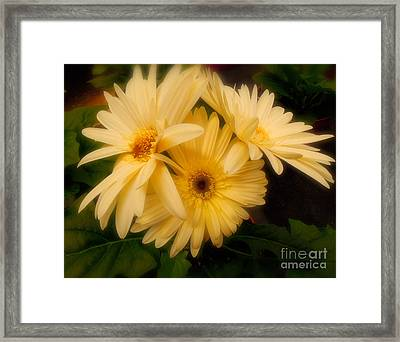 Early Morning Framed Print by Tamera James