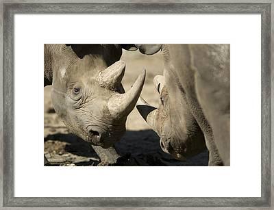 Eastern Black Rhinoceros Framed Print by Joel Sartore