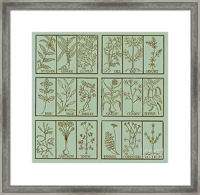 Edible Herbs Framed Print by Science Source