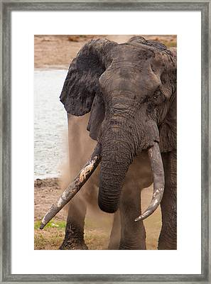 Elephant Dust Bath Framed Print by Hein Welman