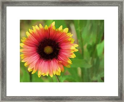 Framed Print featuring the photograph Enough Of The Flowers by John Crothers