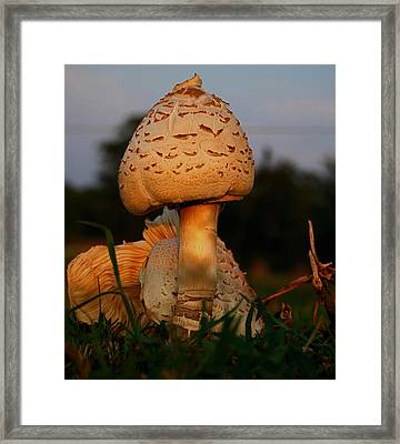 Evening Mushroom Framed Print by Karen Harrison