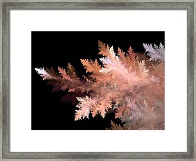 Evergreen Framed Print by Michele Caporaso