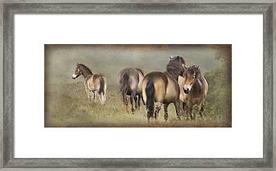 Exmoor Ponies Framed Print by Ethiriel  Photography
