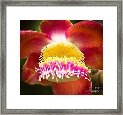 Exotic Cannonball Flower Framed Print