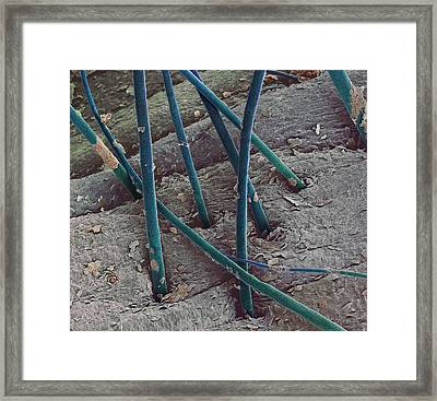 Eyebrow Hair, Sem Framed Print by Steve Gschmeissner