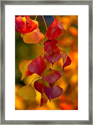 Framed Print featuring the photograph Fall Color 1 by Dan Wells