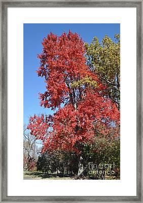 Fall Colors Framed Print by Denise Ellis