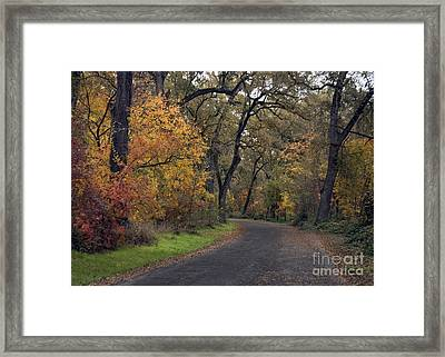 Fall In Bidwell Park Framed Print