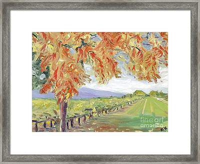 Fall In Napa Valley Framed Print