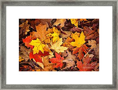 Fall Leaves Background Framed Print