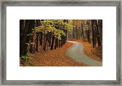 Fall Winding Road  Framed Print