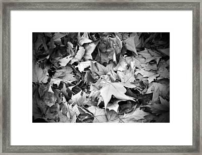 Fallen Leaves Framed Print by Fabrizio Troiani