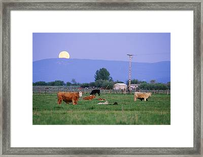 Farm Scene West Of Chiloguin, Oregon Framed Print by Phil Schermeister