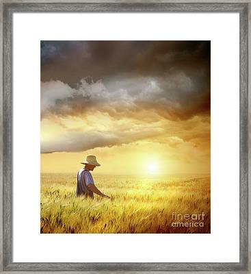 Farmer Checking His Crop Of Wheat  Framed Print by Sandra Cunningham
