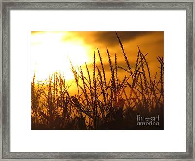 Farming Sunset Framed Print by France Laliberte