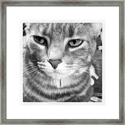 Fatty Framed Print by  Abril Andrade Griffith