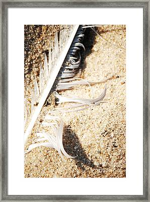 Feather Framed Print by HD Connelly