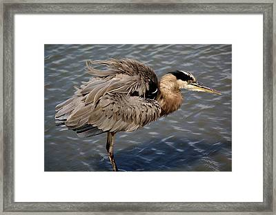 Feathers Framed Print by Paulette Thomas