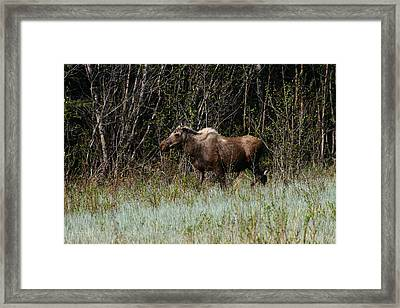 Framed Print featuring the photograph Feeding Along by Doug Lloyd