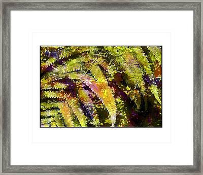 Fern In Dappled Light Framed Print by Judi Bagwell