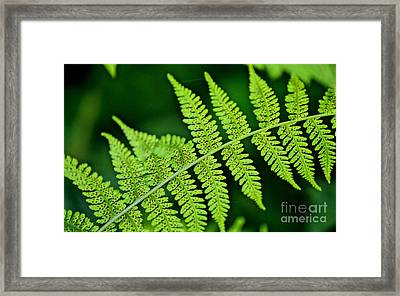 Fern Seed Framed Print by Sharon Elliott