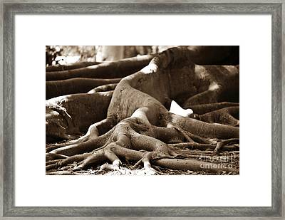 Fig Tree Roots Framed Print