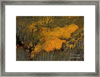 Fine Art Of Nature Framed Print by Vicki Pelham