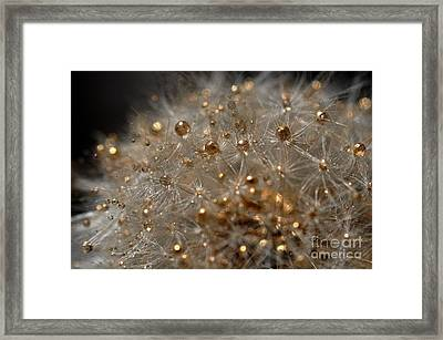 Framed Print featuring the photograph Fleur D'or by Sylvie Leandre