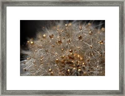 Fleur D'or Framed Print by Sylvie Leandre