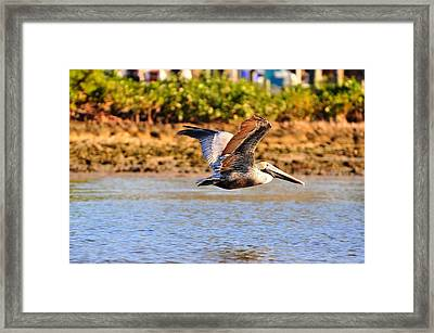 Flight Framed Print by Barry R Jones Jr