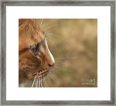 Framed Print featuring the photograph Flitwick The Cat by Jeannette Hunt