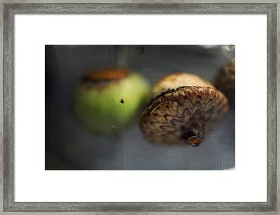 Floating Framed Print by Alicia Haselwood