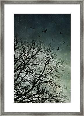 Flock Of Birds Flying Over Bare Wintery Trees Framed Print