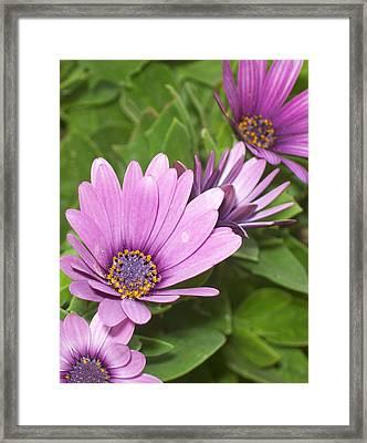Flower Framed Print by Amr Miqdadi