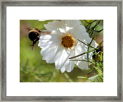 Flower And Bee Framed Print by Christy Woods