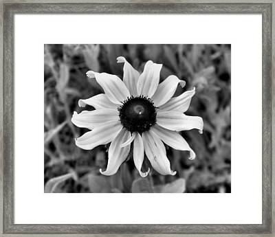 Framed Print featuring the photograph Flower by Brian Hughes