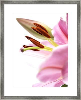 Flower Close-up Framed Print by Ignaz Uri