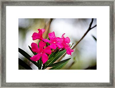 Flower Framed Print by Mike Rivera