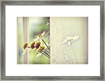 Flowers Framed Print by HD Connelly
