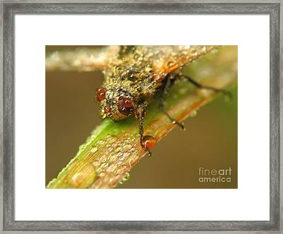 Fly Framed Print by Odon Czintos