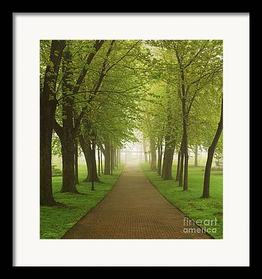 Green Path Framed Prints