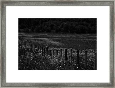 Foraging Break  Framed Print