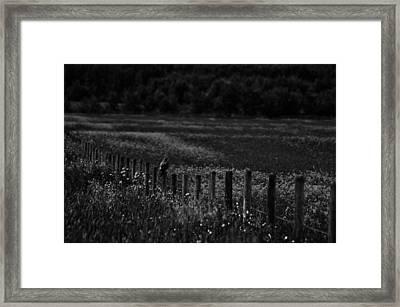 Foraging Break  Framed Print by Empty Wall